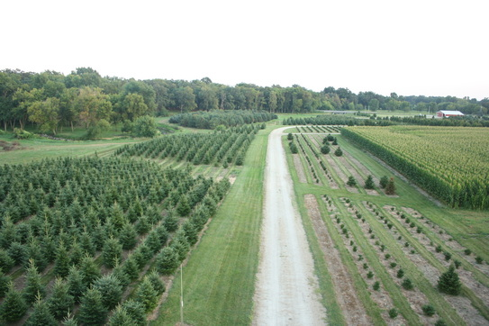 Chicagoland, Illinois Christmas Tree Farms: choose-and-cut Christmas ...
